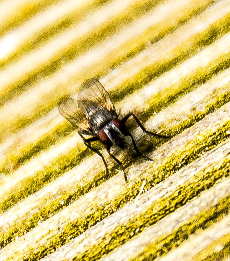 Foto mosca sobre mesa